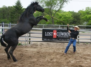 The first meeting of Lost Cowboy with its trainer Cliff Schadt, Jr., upon arrival at its new home on Long Island.