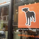 The Spot Experience offers luxury experiences for dogs