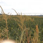 """Passage of the Agricultural Act of 2014 (""""Farm Bill"""") will help stabilize agricultural returns ."""
