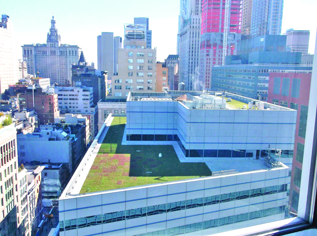 A green roof at 255 Greenwich
