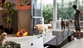 dog-city-pet-spa-692x535