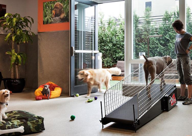 dog-city-pet-spa-692x535