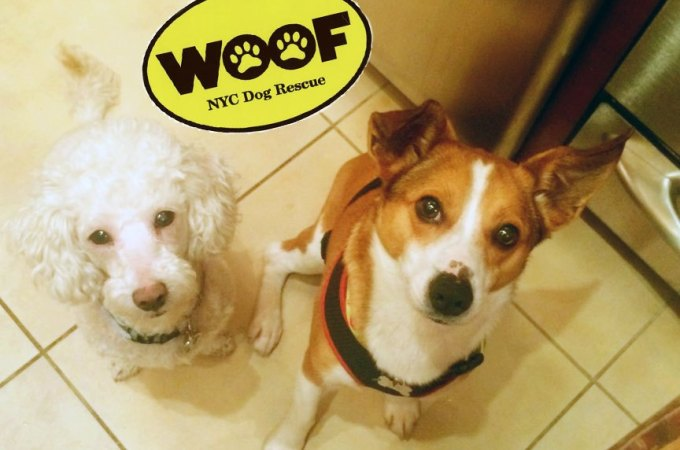 2-woof-dog-rescue-nyc | Real Estate Weekly